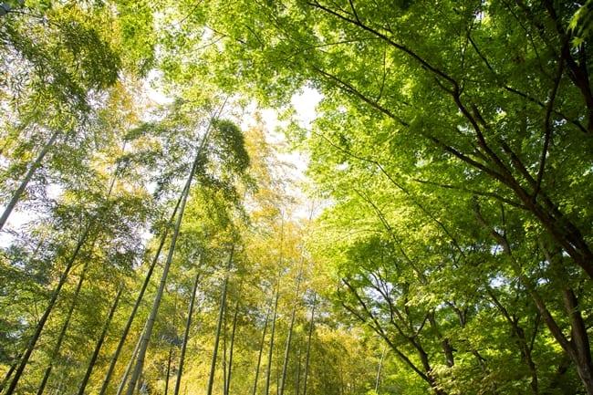Sagano-Bamboo-groove
