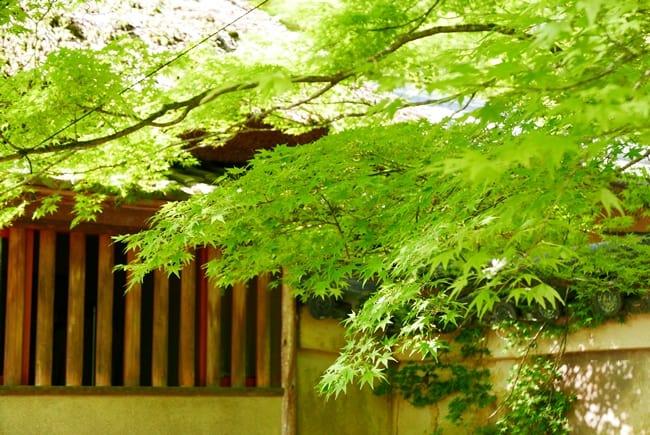 夏季參觀神社