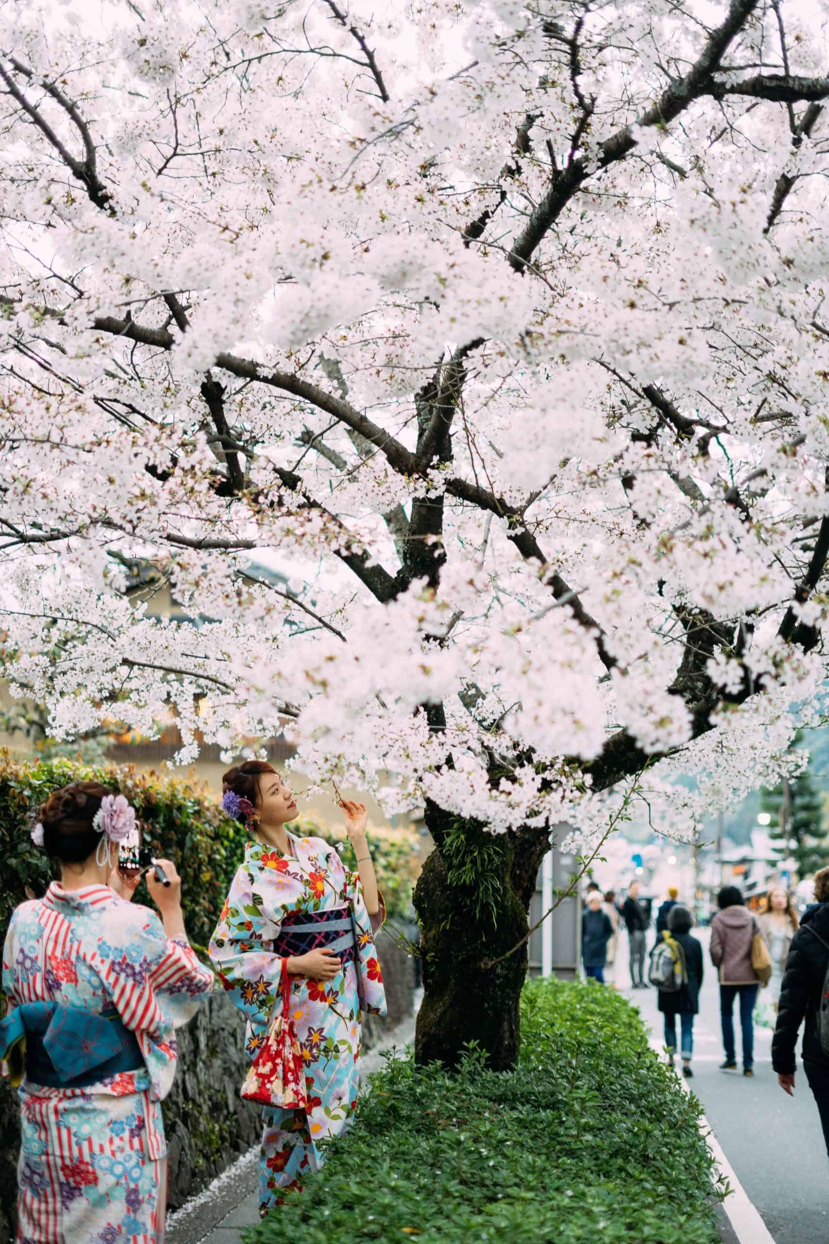 東京の桜の季節はいつですか