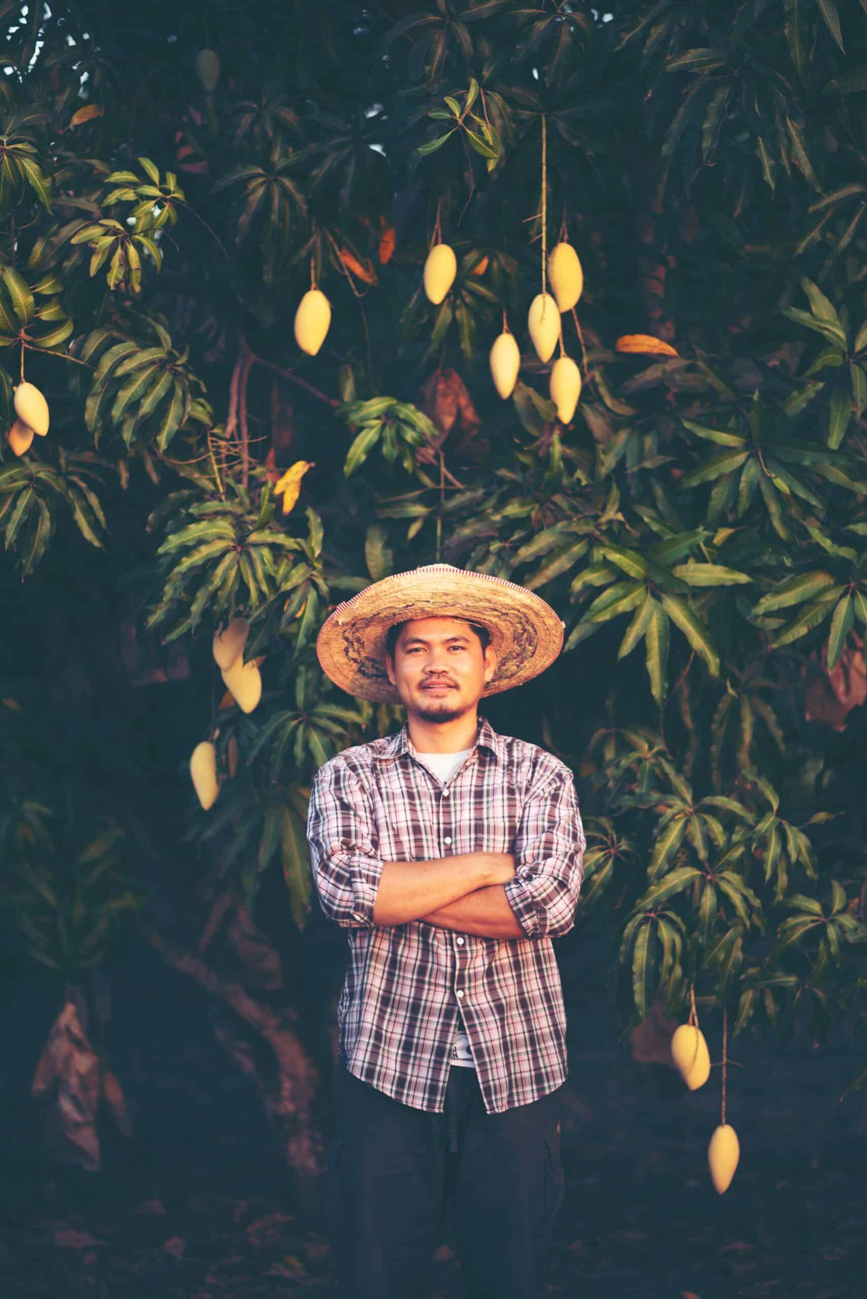 日本芒果多少錢