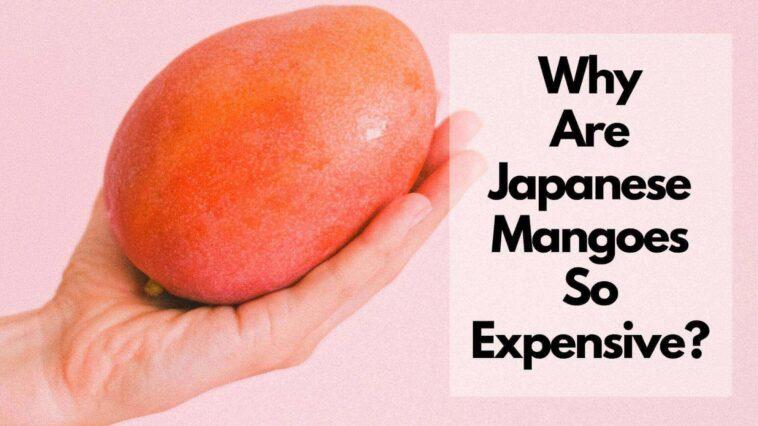 為什麼芒果在日本那麼貴