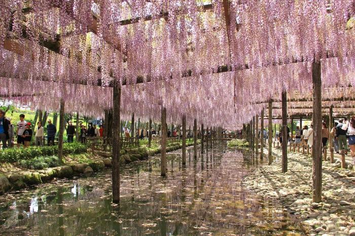 tokyo to kawachi fuji garden