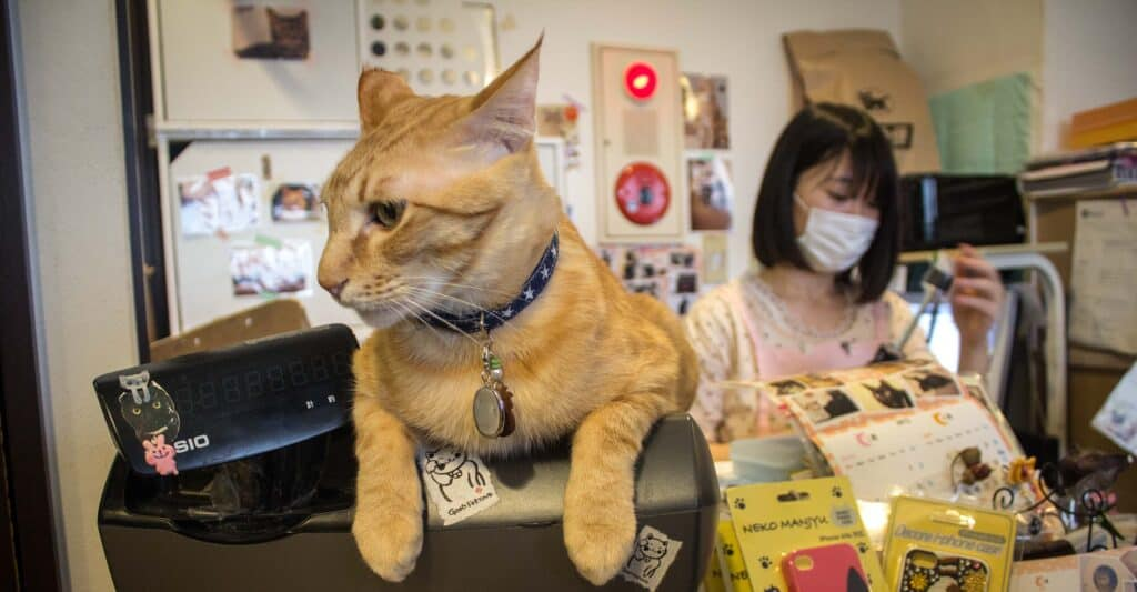 most popular pets in japan