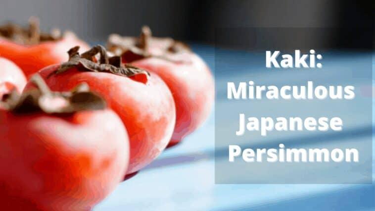 柿:奇跡の柿