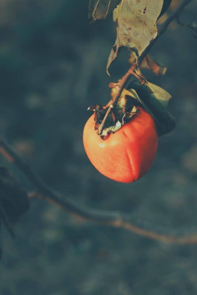 japanese fruit kaki benefits