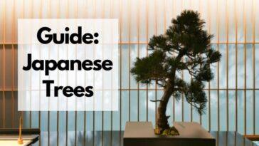 list of japanese trees