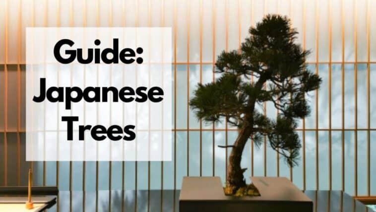 日本の木のリスト