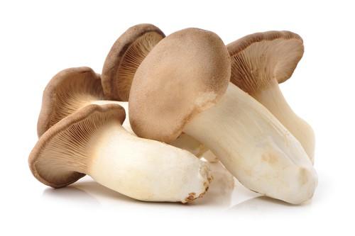 eryngii japanese mushroom