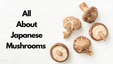 日本蘑菇清單